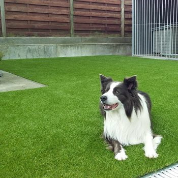 Hond is gek van het gras