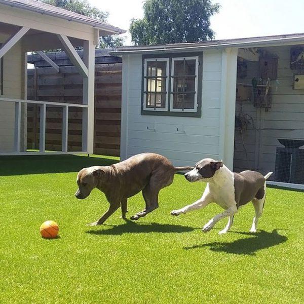 Honden en kunstgras