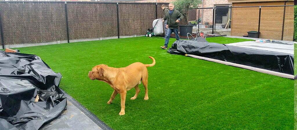 Kunstgras en honden