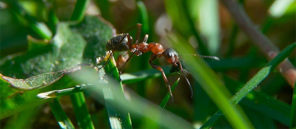 Mierenplaag