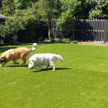 honden tuin kunstgras