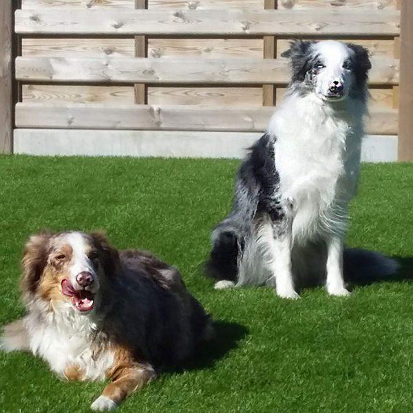 Grastapijt honden