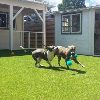 Honden kunstgras