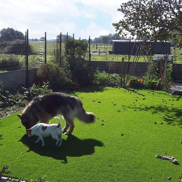 Kunstgras ook voor grote honden