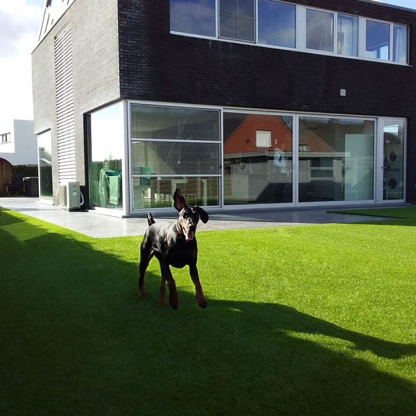 Kunstgrascentrum honden