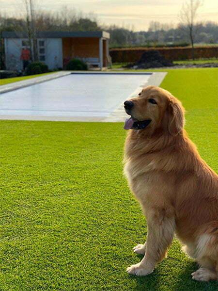 hond in kunstgras tuin